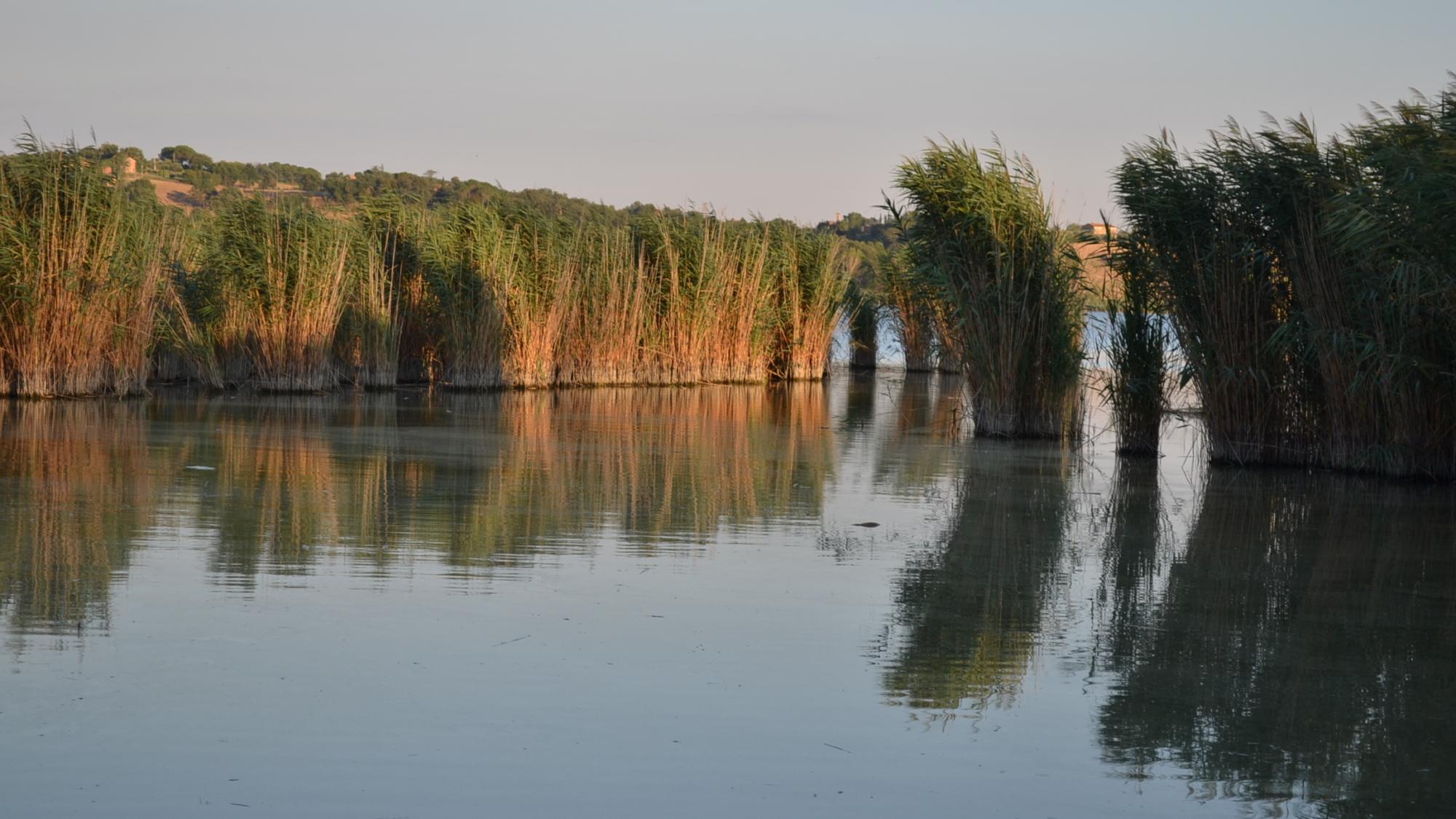 lago_montepulciano_battello